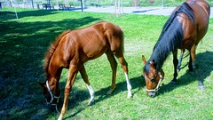 Meeting with HORSES (Ladyhelen_) Tags: horses nature naturelover verses poetry poems words landscape countryside common