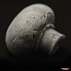 Mushroom (MBates Foto) Tags: agaric availablelight basidiomycete blackandwhite bokeh existinglight foodandbeverage fungi indoors macro minimalist monochrome mushroom nikkorlens nikon nikonais nikond810 nikonfx stilllife tabletop spokane washington unitedstates