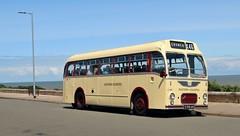 5789 AH, Eastern Counties Bristol MW5G LS789, Gunton Cliffs, 7th. July 2019. (Crewcastrian) Tags: gunton transport buses eastangliantransportmuseum easterncountiesomnibuscompany preservation bristol mw5g ecw 5789ah ls789