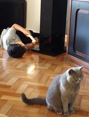 dois gatos (lucia yunes) Tags: menino gato brincadeira familia family cat boy mobilephotographie motoz3play luciayunes amor alone sozinho juntos