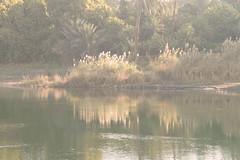 shimmering - River Nile, Egypt
