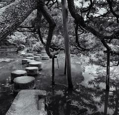 Stepping stones. Explored. (Tim Ravenscroft) Tags: steppingstones stones tree pine pond water garden heianshrine kyoto japan hasselblad hasselbladx1d monochrome blackandwhite blackwhite