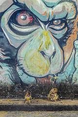 LopBuri_0488 (Jean-Claude Soboul) Tags: asia asie thailand thailande lopburi canon singe happyplanet asiafavorites