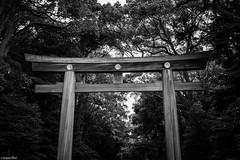 Meiji-Jingu Torii (Toine B.) Tags: tokyo yoyogi meijijingu torii temple shrine japan asia black white bnw nb