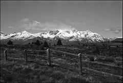 Hochmoor (jo.sa.) Tags: südtirol kleinbild analog analogefotografie landschaft bw schwarzweiss schwarzweissfotografie lebensraum