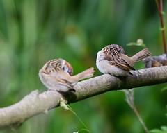 Low Barnes Nature Reserve (chris_m03) Tags: