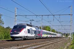 TGV PSE 65 des 30 ans du TGV sur la PLM (Alexoum) Tags: marche répétition paris lyonperrache rame tgv pse 65 décorée 30 ans la roule saintgermainaumontd or couzon sncf
