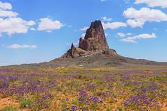 Monument Valley (jen.ivana) Tags: nature travel usa arizona landscape blooming flower purple sky rock