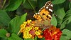 Butterfly (Meino NL) Tags: butterfly vlinder costabrava españa catalunya