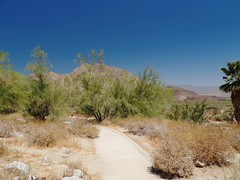0012ex Anza-Borrego Desert State Park (jjjj56cp) Tags: desert borregospringsdesertstatepark ca california summer june cactus p1000 coolpixp1000 nikoncoolpixp1000 jennypansing landscape desertlandscape californiastatepark palms scrub dry bluesky clear clearbluesky deepblue