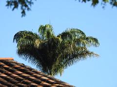 Pirenópolis (Alexandre Marino) Tags: pirenópolis goiás árvores trees