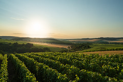 Morning in the vines (ZeGaby) Tags: champagne landscape leverdesoleil marne naturephotography paysage paysagedechampagne pentax2470mm pentaxk1 sun sunlight sunrise vignoble vines vineyards avenayvaldor france