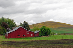 Driving the Palouse Scenic Byway, WA (SomePhotosTakenByMe) Tags: farm bauernhof landwirtschaft palouse landscape landschaft palousescenicbyway scenicbyway outdoor usa america amerika unitedstates washington ontheroad
