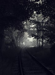 """Dead end"" (L1netty) Tags: thevanishingofethancarterredux thevanishingofethancarter theastronauts pc game gaming pcgaming videogame reshade screenshot virtual digital 4k landscape scenery nature trees road dark outdoor monochrome"