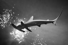 minesweeper (hypervel) Tags: point defiance zoo aquarium tacoma washington state