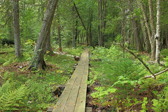 Hiawatha National Forest (DavetheHiker) Tags: michigan mi michiganupperpenninsula up mackinaccounty hiawathanationalforest hnf northcountrytrail nct hiking trail nature outdoors trees forest boardwalk upperpeninsula