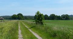 Nearing the Archemerberg (joeke pieters) Tags: 1470765 panasonicdmcfz150 salland overijssel nederland netherlands holland archemerberg landschap landscape landschaft paysage wandelsporendalfsenommen2