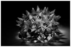 Macro Mondays #Danger (T.Seifer : )) Tags: macromondays hmm danger glass closeup nikkor blackandwhite blackwhite whiteandblack whiteblack hedgehog