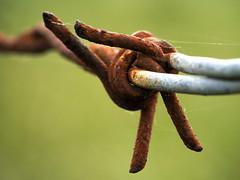 Macro Monday: Danger! (John Spooner) Tags: panasonic lumix gx80 olymus 60mm macro danger barbed wire rust corrosion corroded fence macromondays
