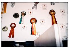(schlomo jawotnik) Tags: 2019 juni kleinflöthe ponyhof prämienfohlen schwarzrotgold championat türe aufkleber stall reiterhof zweige tunierschleife schlomostierwelt film analog usw