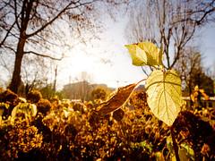 Berlín. (Antonio R. Torres) Tags: park sunlight tree sheet