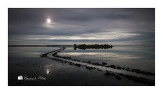 Sows Ear? (RonnieLMills 7 Million Views. Thank You All :)) Tags: rough island islandhill high tide strangford lough causeway stones reflections water sun clouds comber newtownards county down northern ireland