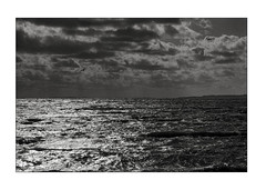 Storm approaching Vitskøl Abbey (K.Pihl) Tags: storm nature water denmark blackwhite schwarzweiss film olympusom4 perceptolstock vitskøl zuiko50mmf14 sea pellicolaanalogica clouds bw kodaktrix400320 analog monochrome 400tx