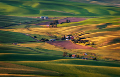 Palouse Farmland View From Steptoe Butte (EdBob) Tags: morning sunrise butte view farm farmland agriculture viewpoint steptoe steptoebutte steptoebuttestatepark travel light usa nature rural america outdoors washington colorful shadows wheat hills washingtonstate colfax agricultural valleys lentil palouse easternwashington washingtonstatetourism edmundlowe edlowe edmundlowephotography allmyphotographsare©copyrightedandallrightsreservednoneofthesephotosmaybereproducedandorusedinanyformofpublicationprintortheinternetwithoutmywrittenpermission