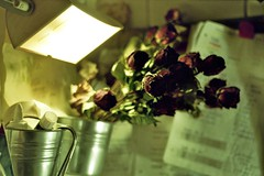 dried roses (pancolar user) Tags: rosas roses rosier ruusut розы rósir róże güller τριαντάφυλλα rósanna roser analog analogphotography analoque argentique film filmcommunity filmshooters filmphotography zeissikon zeissikoncontaflex zeissikoncameras contaflex contaflexsuper contaflexsuperb tessar tessar50mm