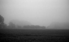 Outside looking in (Rosenthal Photography) Tags: asa400 kleinbildformat ilfordlc2912920°c9min ff135 analog ilfordhp5 epsonv800 olympustrip35 schwarzweiss frühling ilfordrapidfixer 35mm sommer 20190601 outsidelokkingin insidelookingout mistymirror mirror mist fog landscape fields trees farm mood june summer morning olympus olympus35 trip trip35 dzuiko zuiko 40mm f28 ilford hp5 hp5plus lc29 129 14 rapid fixer epson v800