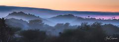 Oriental Quivers (Jerzy Orzechowski) Tags: blue sunrise quivertree namibia silhouette fog orange yellow keetmanshoop landscape elitegalleryaoi bestcapturesaoi aoi