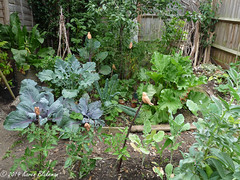 July 1st, 2019 Part of the fruit and veg garden (karenblakeman) Tags: cavershamgarden caversham uk fruit vegetables foodgrowing 2019 july 2019pad reading berkshire