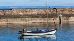 Gone fishing (hazelhouliston) Tags: heron bird sea boat eastneuk scotland fife water blue sky wildlife harbour stmonans outside nature bassrock firthofforth
