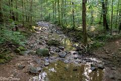 FrozenHead_20190706_03 (Greg_Tataryn) Tags: sonya7iii sigma35mm nature stream water rocks forest tree frozenhead