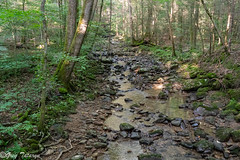 FrozenHead_20190706_02 (Greg_Tataryn) Tags: sonya7iii sigma35mm nature stream water rocks forest tree frozenhead
