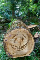 FrozenHead_20190706_01 (Greg_Tataryn) Tags: sonya7iii sigma35mm nature stream water rocks forest tree frozenhead