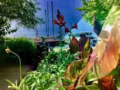 Toronto (i_kaya@rogers.com) Tags: toronto ontario park flowers lake lakeontorio boats tree canada art photo photograph photography