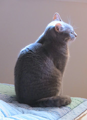 Millie 8 May 2019 2927Ri (edgarandron - Busy!) Tags: cat cats kitty kitties tabby tabbies cute feline millie graytabby
