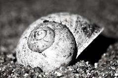 "Pet Shell <a style=""margin-left:10px; font-size:0.8em;"" href=""http://www.flickr.com/photos/155733793@N07/48236268382/"" target=""_blank"">@flickr</a>"