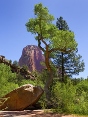 Kolob Zion National Park Utah (swissuki) Tags: national park zion ut utah usa kolob largelandscape landscape mountain naturesky