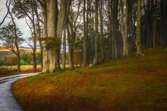 Scotland (Linda Crawley) Tags: sony a6500 painterly topaz scotland