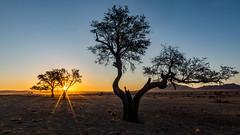 Namibia Sunset (Nature's Image Photography) Tags: sunset starburst silhouette namibia landscape africa
