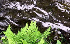 Ferns and bubbles (yooperann) Tags: upper peninsula michigan alger county green ferns water bubbles flowing