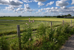 July (Julysha) Tags: dehoef field flowers road clouds july summer 2019 d7200 nikkor1680284 acr fens thenetherlands countryside