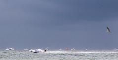 IMG_9223 (ndaruxiz12) Tags: boatrace fl sarasota