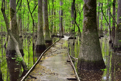 I Took a Traveled Path That Led Me to a Wilderness of Adventures (Congaree National Park)