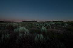 Sagebrush in Blue Light (theskyhawker) Tags: great sage plain desert utah colorado plateau idyllic evening sunset low light outdoors landscape united states san juan county