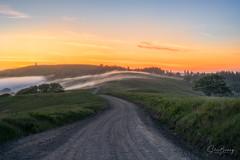 Crossing Bald Hills (sberkley123) Tags: trees d850 nikon sunset forest hiking california redwoodsstatepark fog usa 80200mm oak redwoods ngc