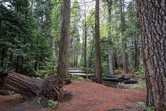 Deep woods (mpalmer934) Tags: yosemite national park california forest stream creek hiking backwoods