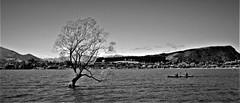 Lake Wanaka monochrome (SM Tham) Tags: newzealand southisland wanaka lakewanaka thatwanakatree willow tree lake water kayak kayakers boat mountiron landscape monochrome blackandwhite town solitary